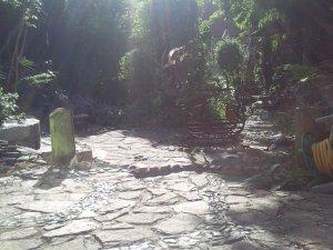 Back garden..